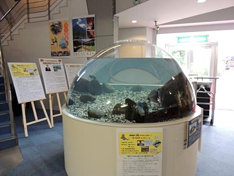 オオウナギを展示しているドーム水槽