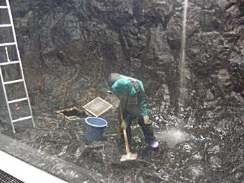 中水槽の掃除を頑張るタッチャン