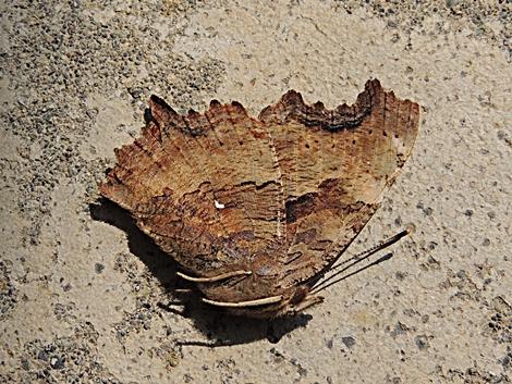 横になる蝶